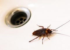 Stop Individuals Undesirable unwanted pests Before They Might Get Comfortable By Permitting A Flea Control Service