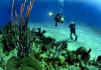 4 Best Dive Sites in North Sulawesi, Include Bunaken!